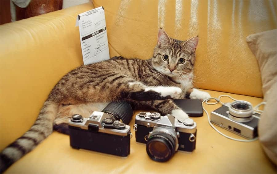 Cat with cameras