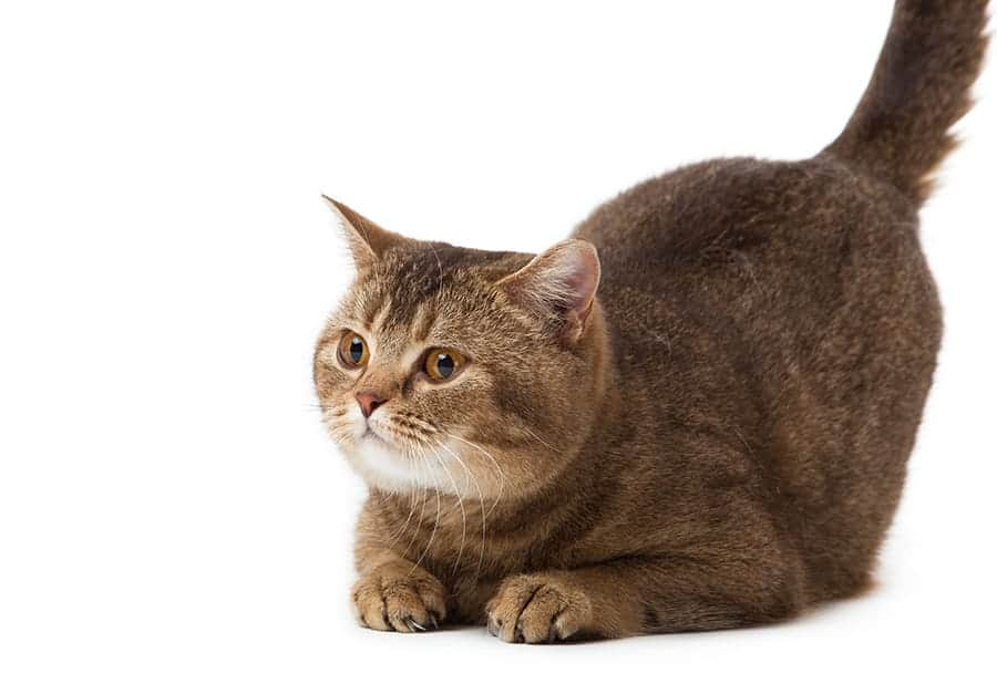 Large cat names
