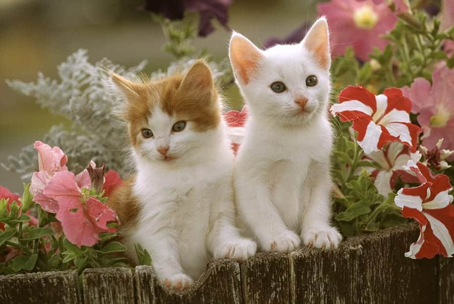 cats with flowers