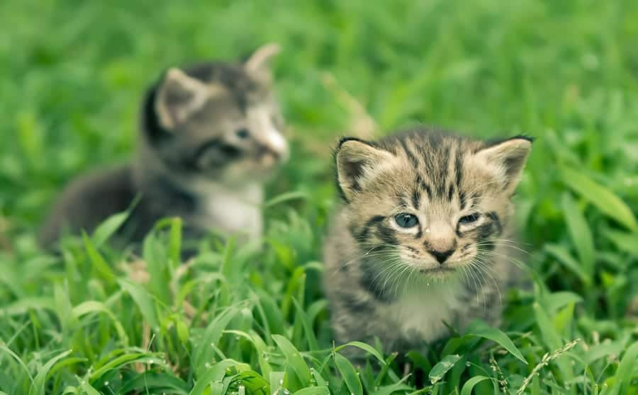 kittens in the grass