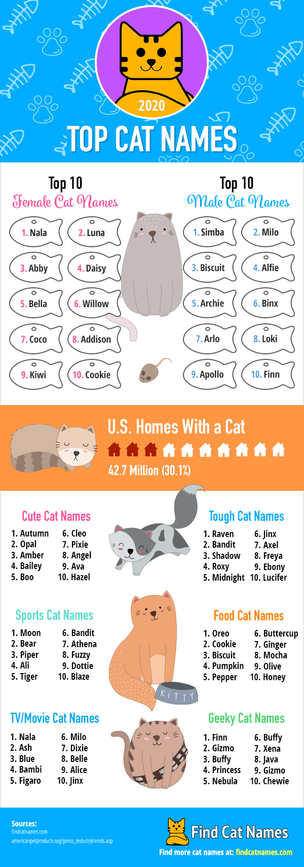 top cat names of 2020 infographic