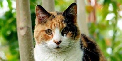 calico cat names thumbnail