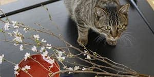 japanese cat names thumb