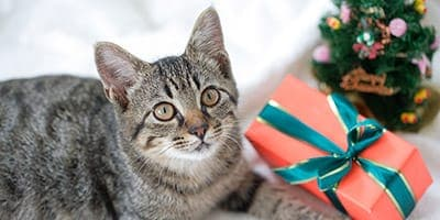 cat christmas presents