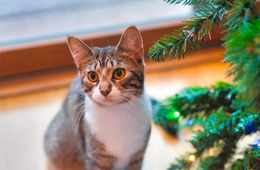 cat next to Christmas tree