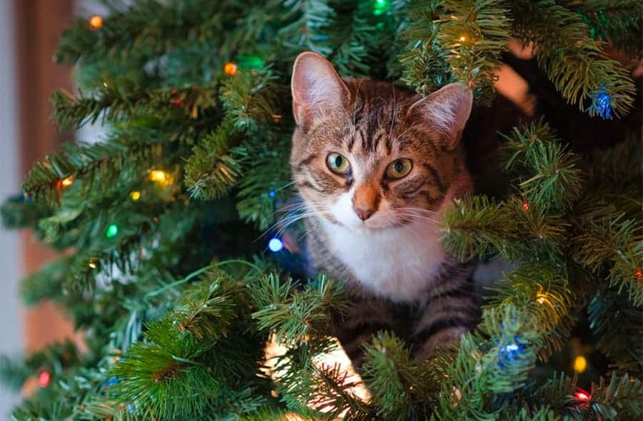 Christmas cat names - cat in Christmas tree