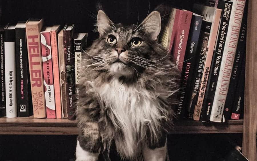 nerdy cat in books