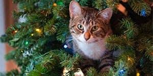 christmas cat names thumbnail