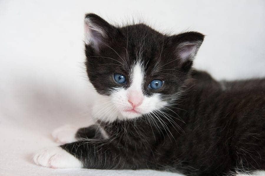 Blue eye cat names