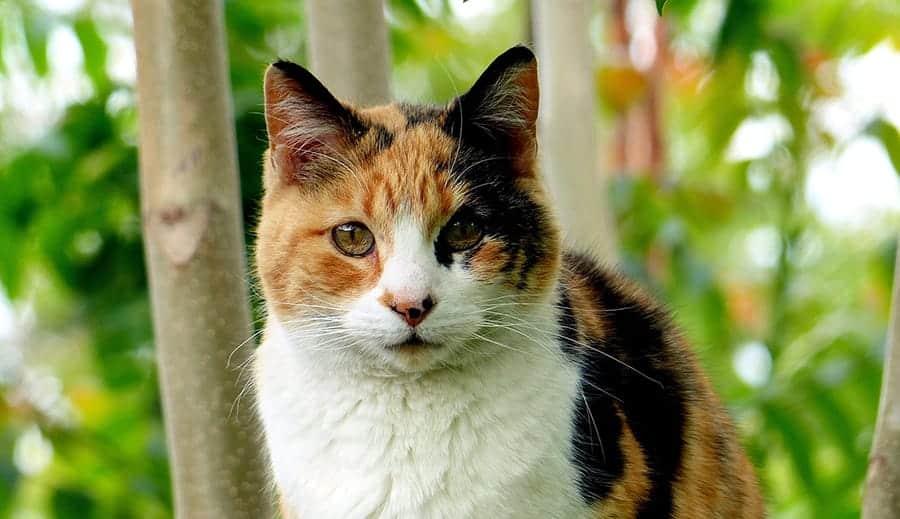 unique calico cat names - cat photo