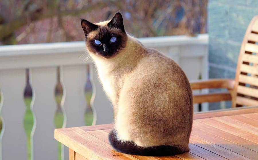 Unisex cat names