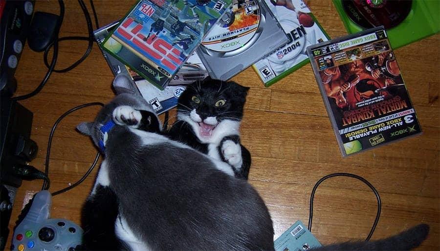 cat vidoe games