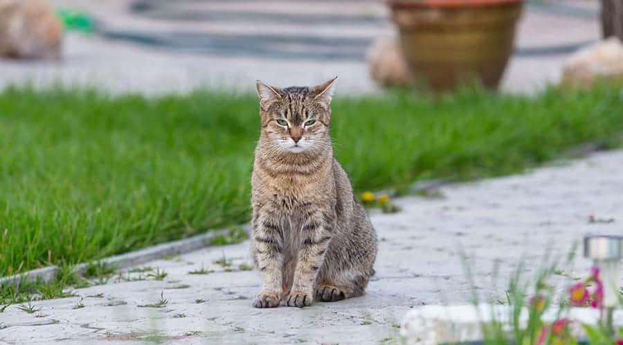 cat sitting on stones