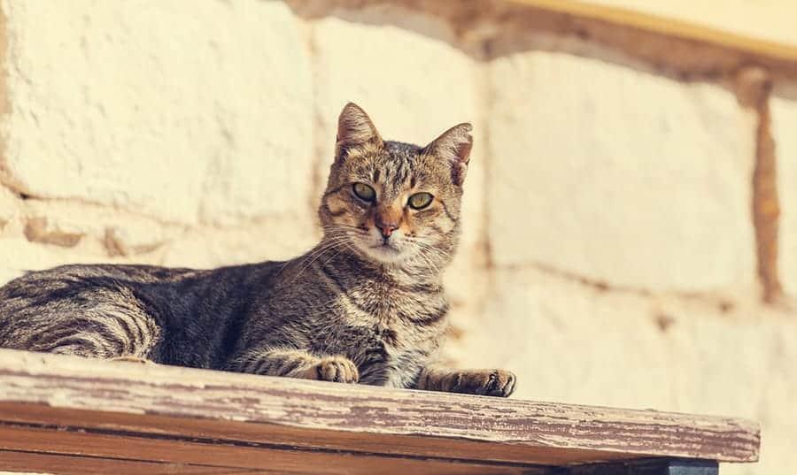 cat resting on wood shelf