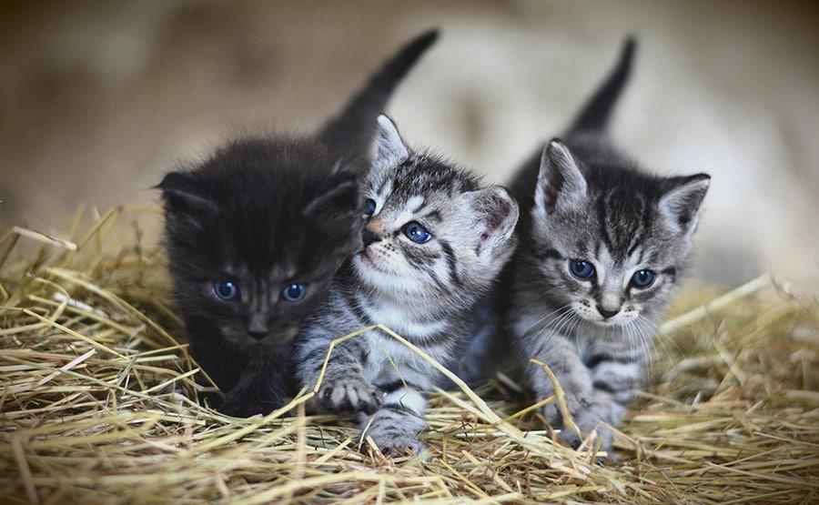 group of 3 kittens