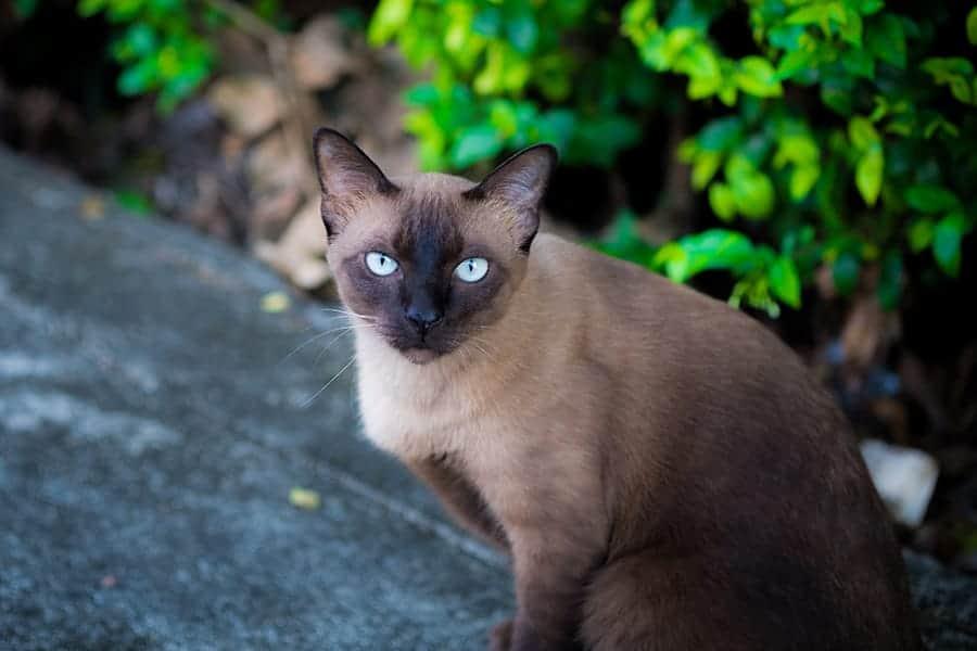 Brown cat names