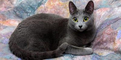 grey cat names thumbnail
