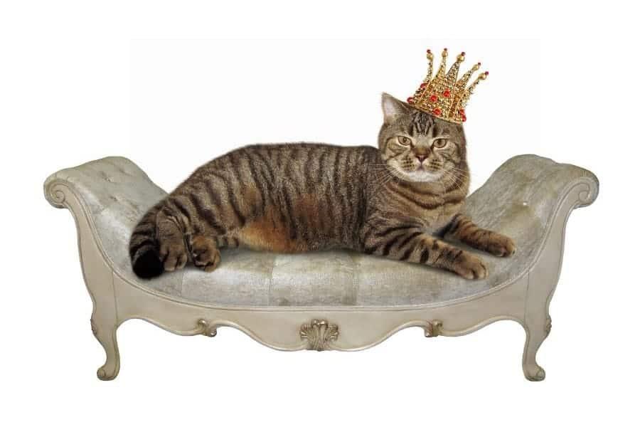 Regal cat names