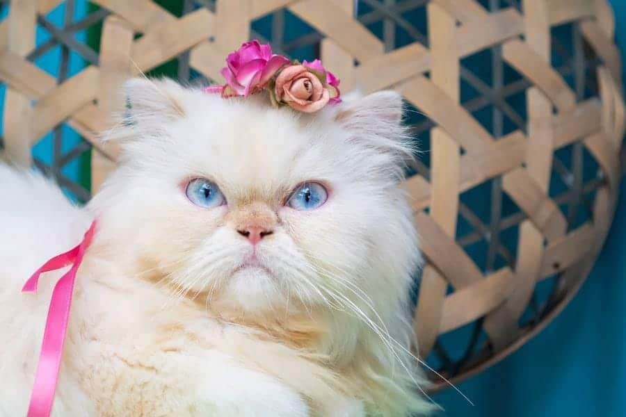 cat with flowers in its hair