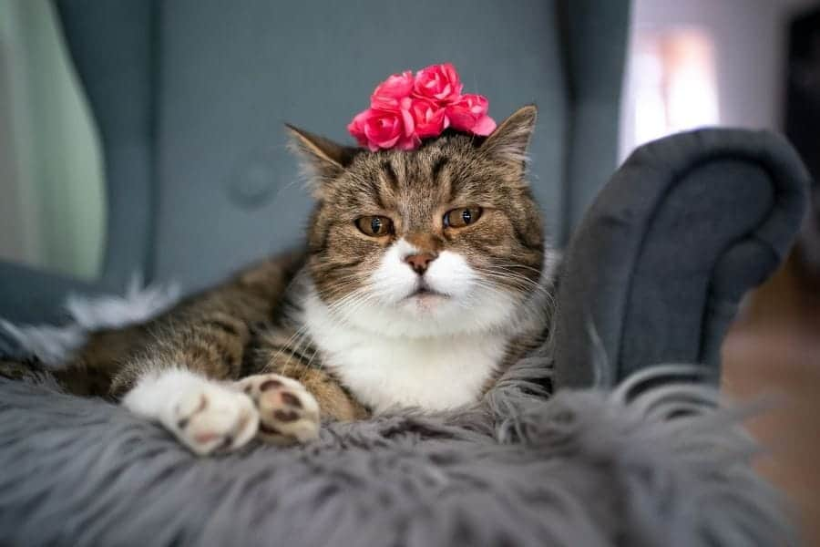 cat with a bouquet of flowers on its head