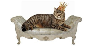 royal cat names thumbnail