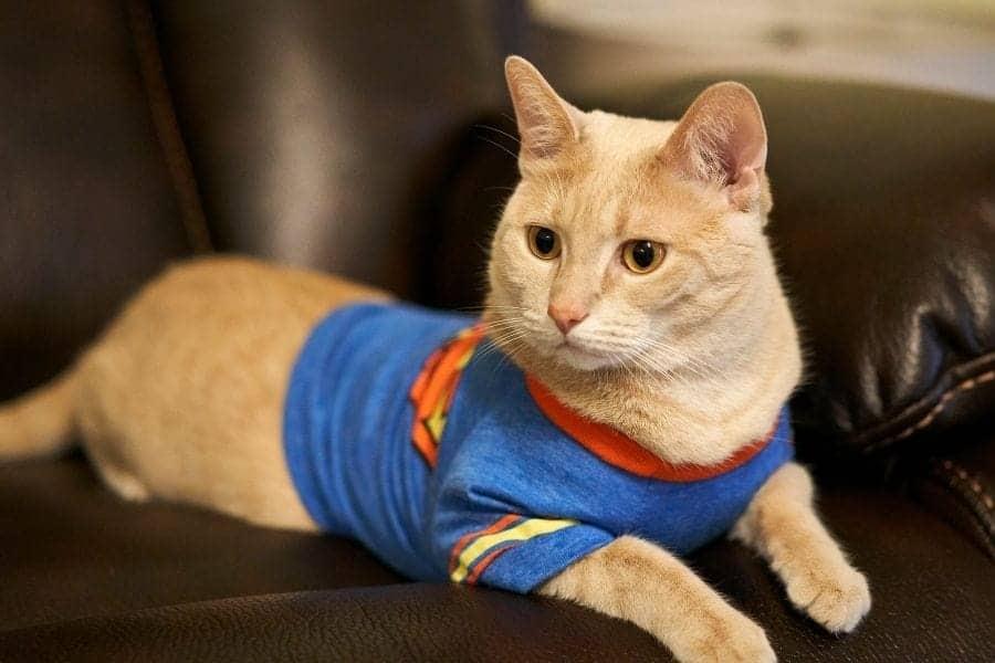 Superhero cat names