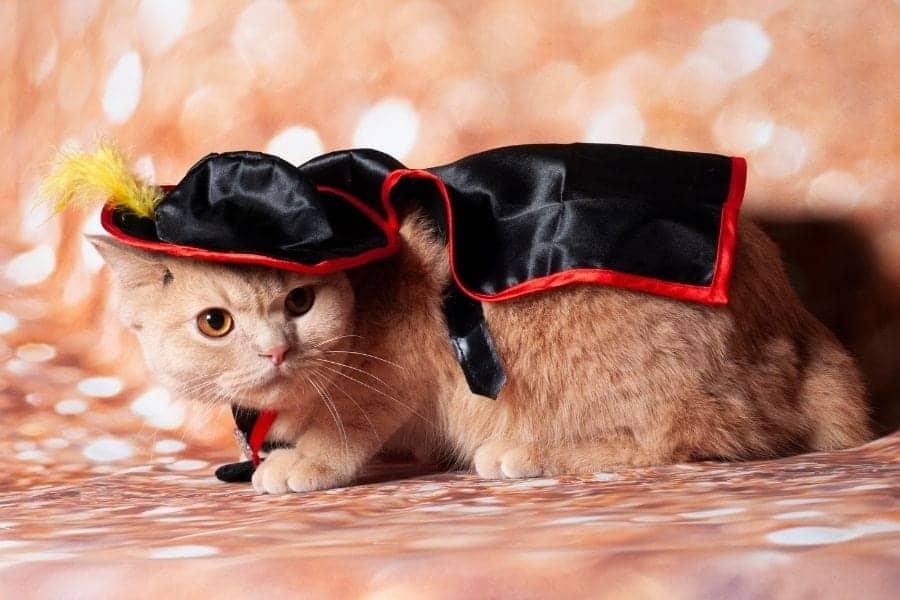 Zorro cat