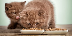 How Long To Feed Kitten Food To Your Cat