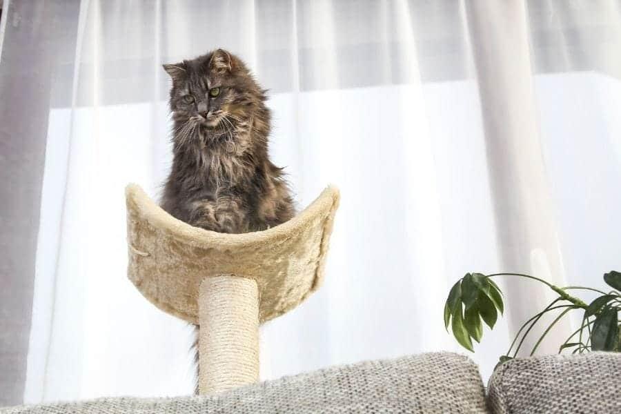 Benefits of a cat tree