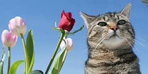 flower cat names thumbnail