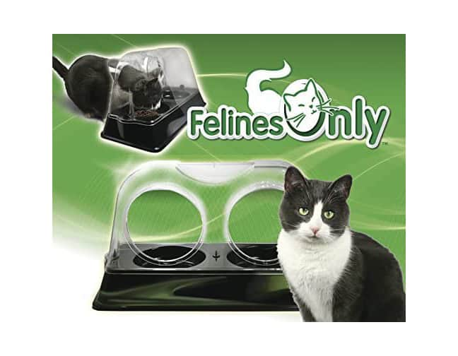 Felines Only  Purrrfect Cat Dish