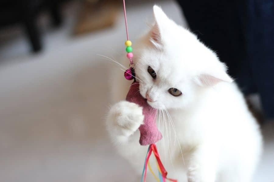 Best kitten teething toys