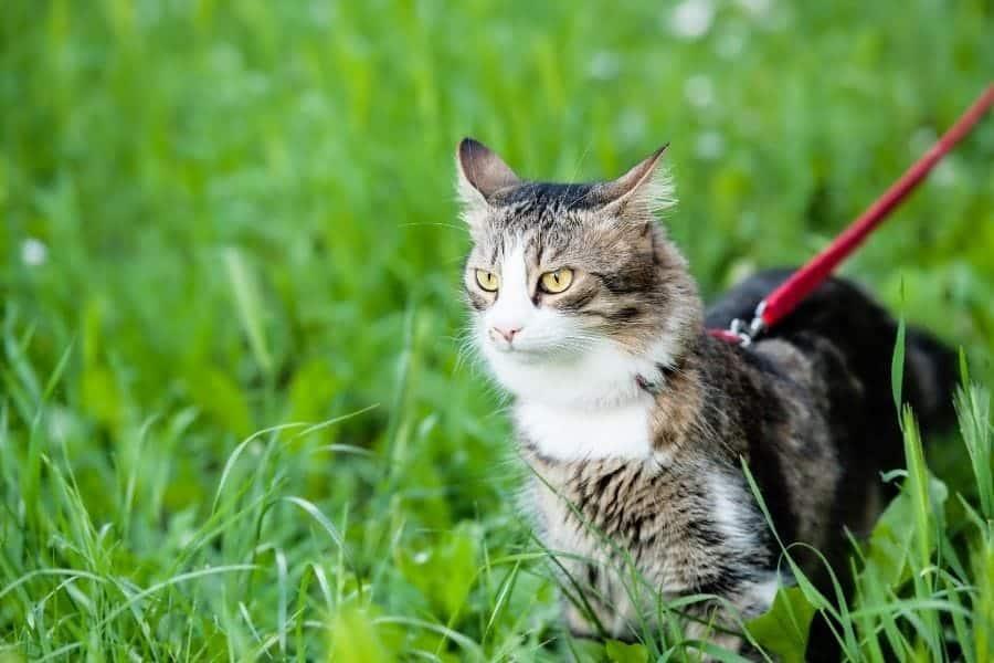 Kitten outside