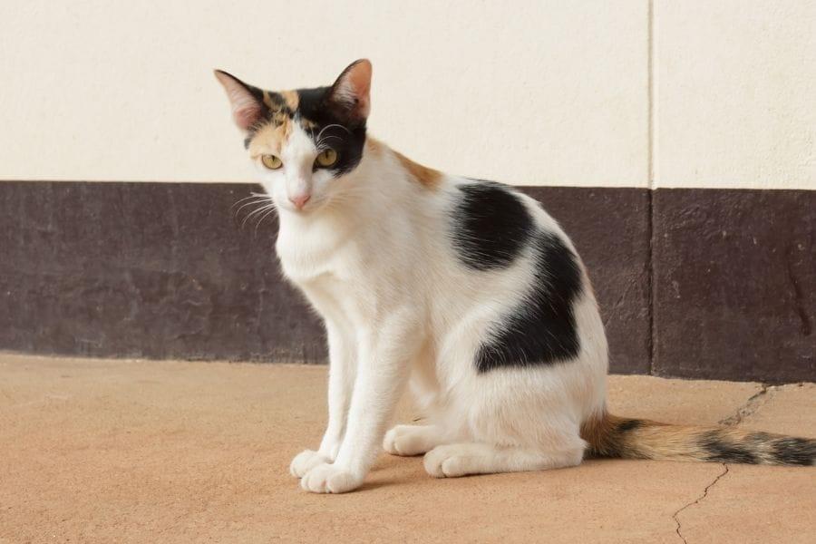 How to Train a Cat to Do Tricks
