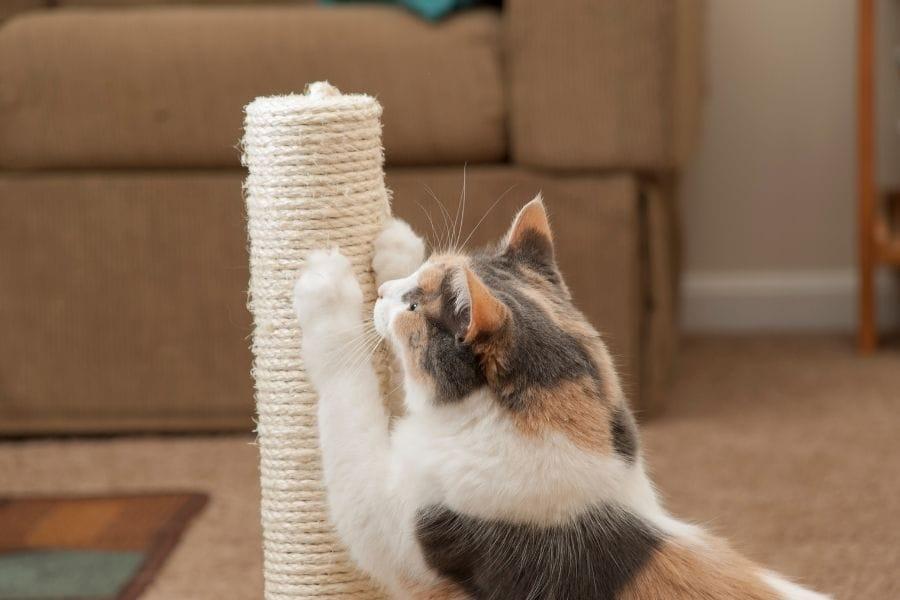 Best Cat Scratching Post Picks