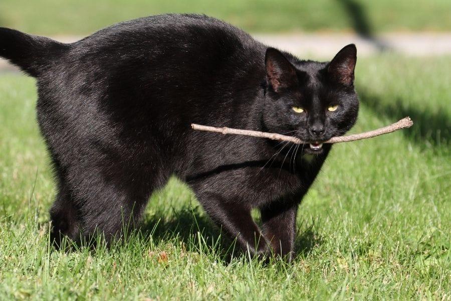 Cat fetch