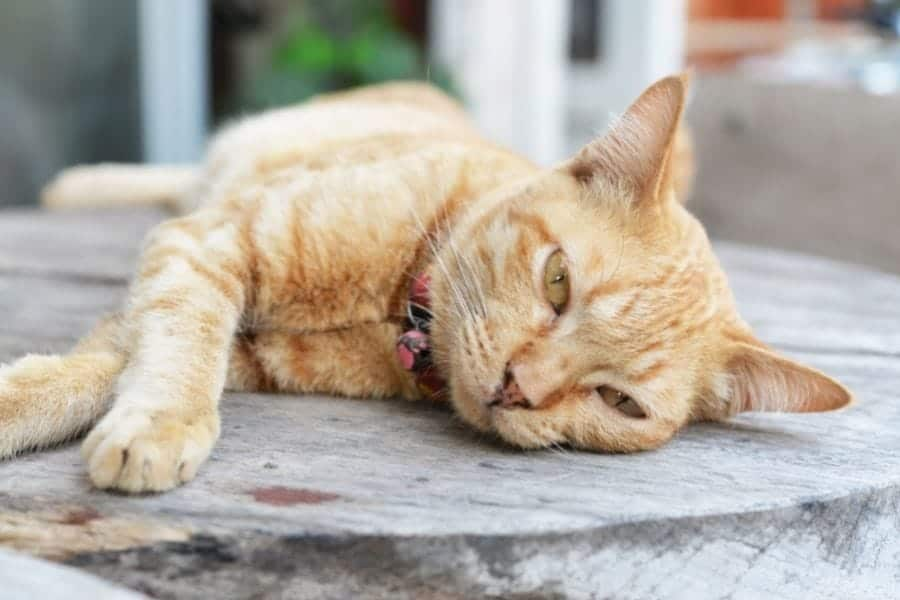 The Best Commercial Cat Food for Kidney Disease