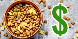 best budget cat food thumbnail