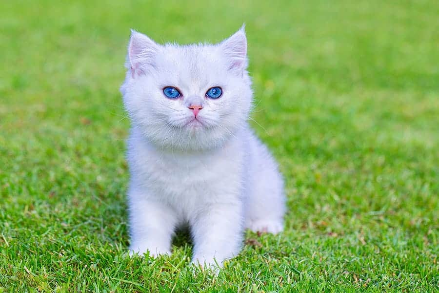 white cat names
